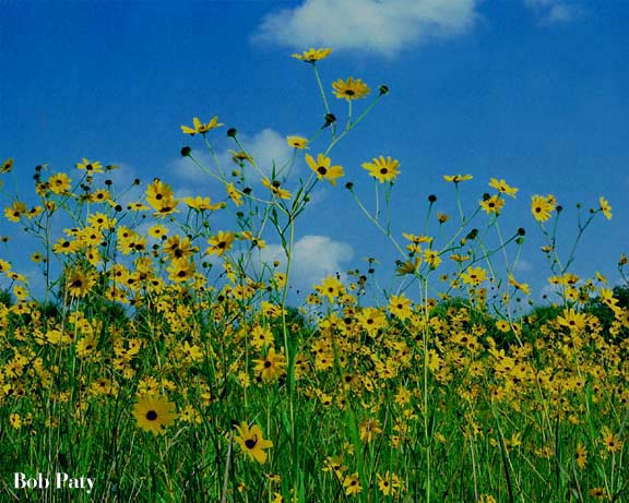 Photography from Titusville, Florida / Sunflowers